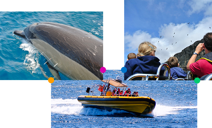 lanzarote boat trips dolphins
