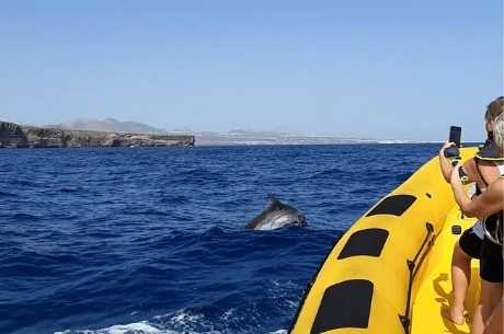 best dolphin tours in Lanzarote island
